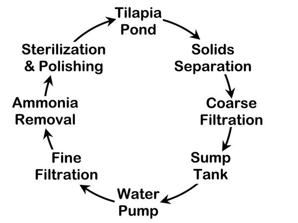 Tilapia Farming Guide Understanding Tilapia Farming Systems
